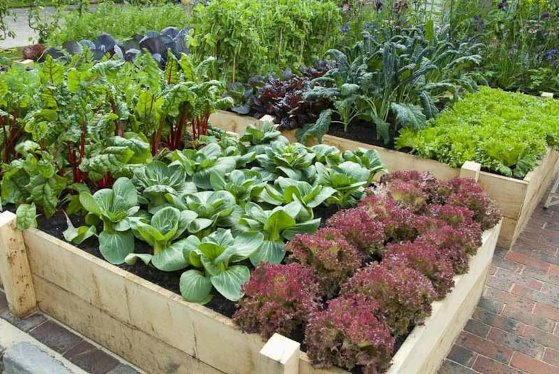 Грядки для ленивых: фото и советы по созданию огорода без хлопот