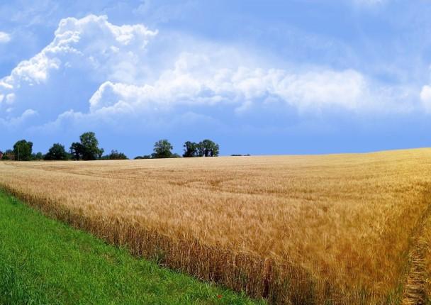 Решение спорных ситуаций по кадастровой стоимости участков земли с целью уменьшения налога на землю